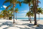 迈阿密 OW潜水证考证 5日游