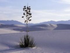 LAX接机+美南阳光-大峡谷八天+南加主题项目十选二