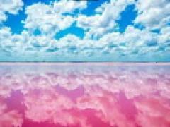 游粉紅湖+观赏火烈鸟中文一日游
